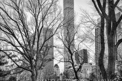 Trees-Central-Park-New-York