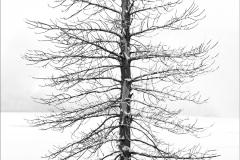 single-tree-wyoming