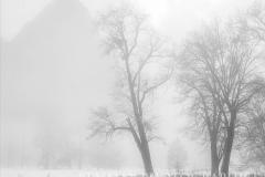 trees-in-fog-yosemite-