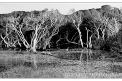 bog-and-trees-tas-2011-a2-large