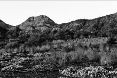 flinders-sticks-and-hills