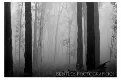 grampians-trees-fog