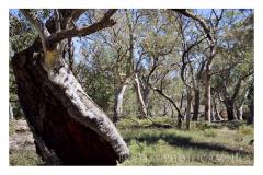 hollowtreeflindersranges