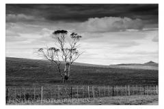 single-tree-tasmania-large