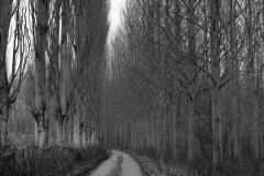 lane-cotswolds