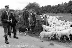 shepherds-cotswolds-u-k