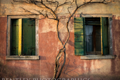 windows-and-grapevine-murano-venice
